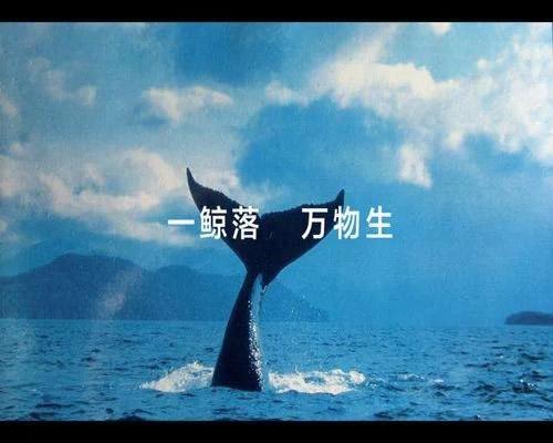 一鲸落万物生,聊没落网站最后的赚钱生态插图